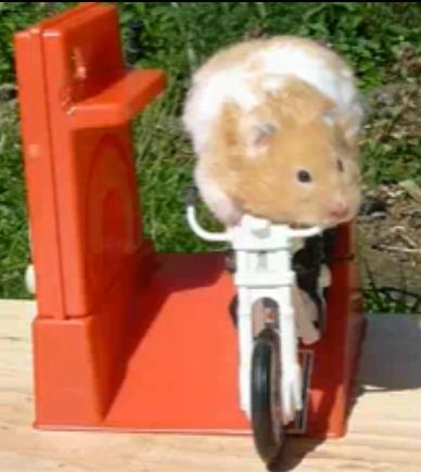 hammy_the_hamster1